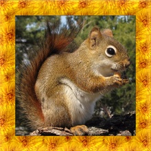 Squirrel Simulator 3D